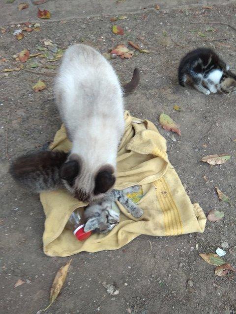 Экологическая катастрофа в Крыму: в оккупированном Армянске умирают животные (ФОТО 18+) - фото 154137