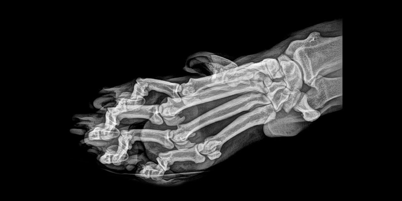Зоопарк в Орегоне показал рентгеновские снимки живтоных - фото 154356