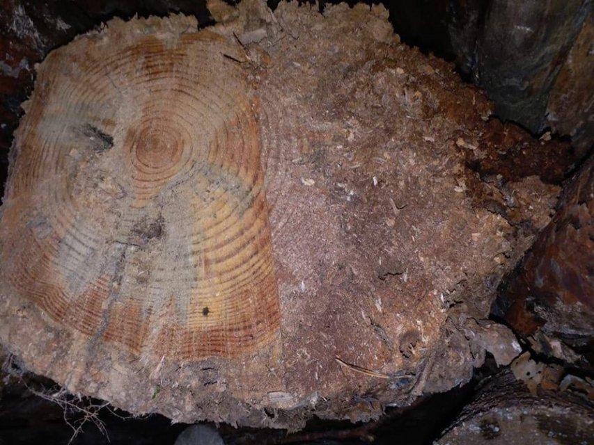 Ёлки-палки: Кто крышует контрабанду леса в Придунавье - фото 160946