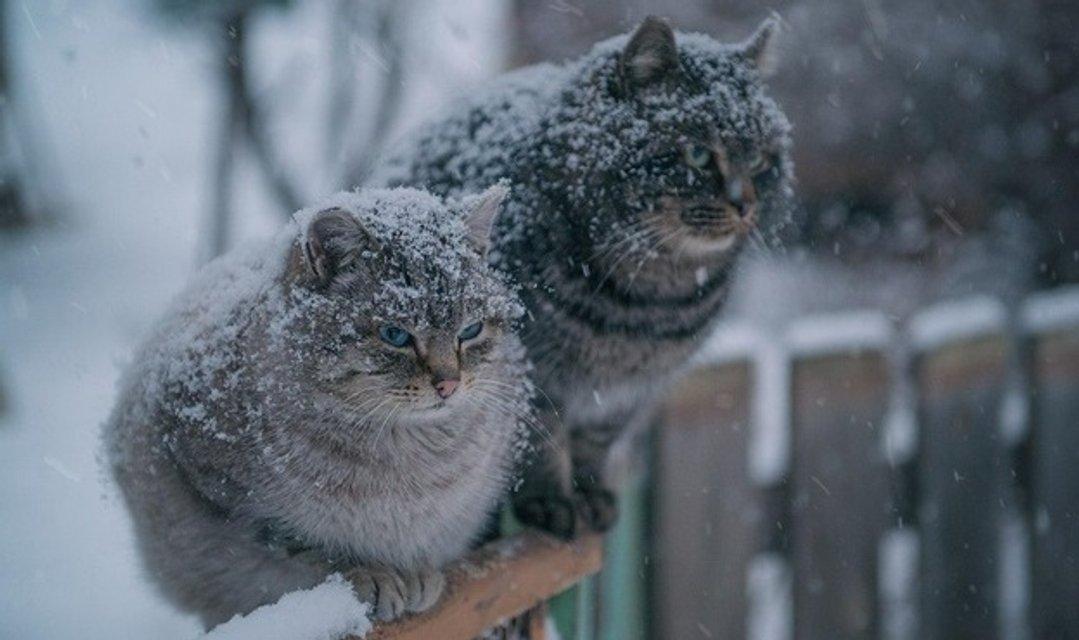 Какой будет зима 2019: прогноз погоды для Украины - фото 162809