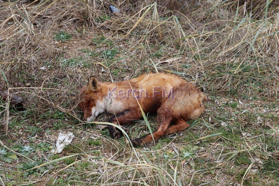 В Керчи выбросили в море токсичные отходы - фото 170848