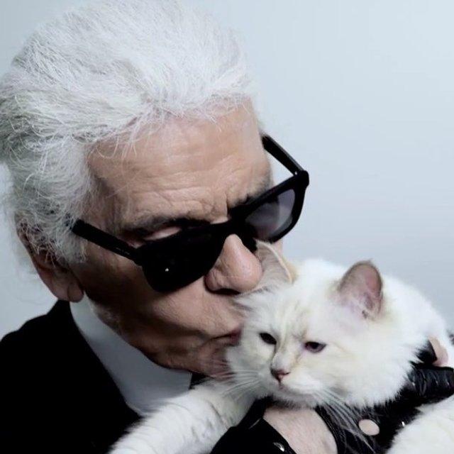 Карл Лагерфельд завещал смешать его прах с прахом любимой кошки - фото 173219