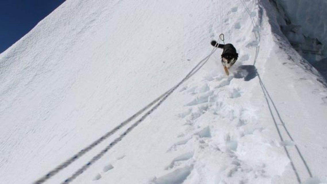 Бродячий пес привязался к альпинистам и покорил с ними вершину в 7 тысяч метров - фото 176525