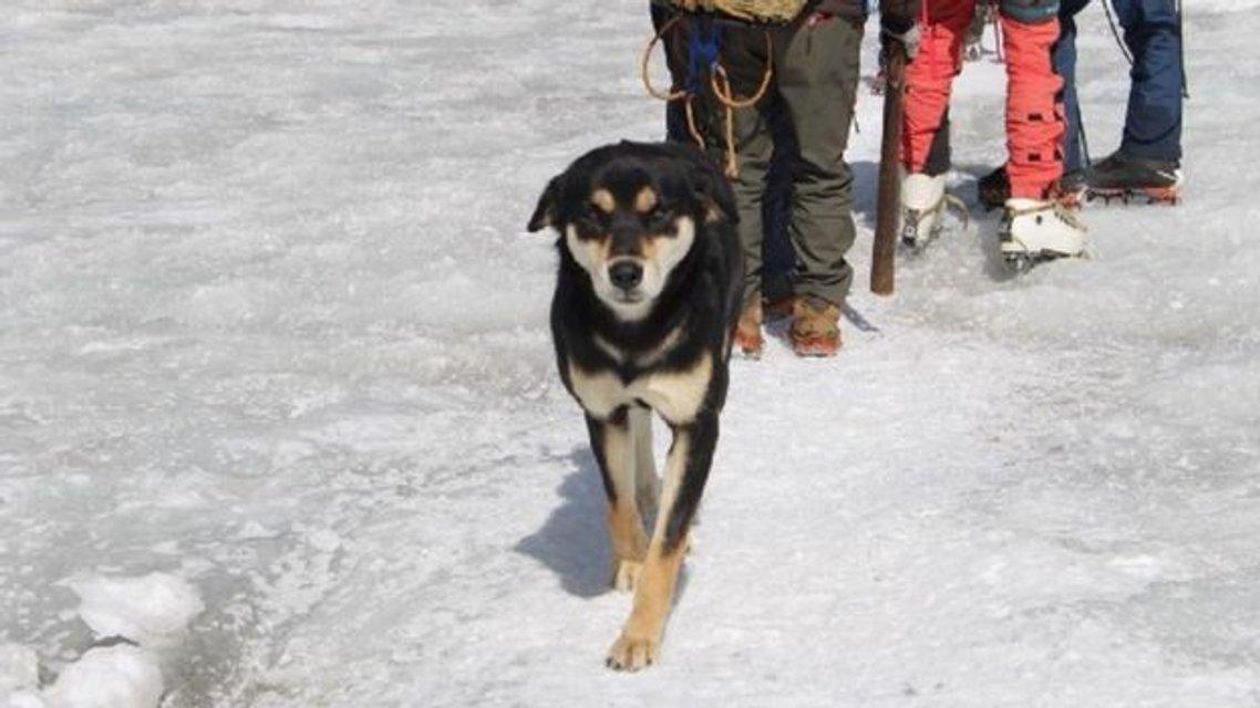 Бродячий пес привязался к альпинистам и покорил с ними вершину в 7 тысяч метров - фото 176526