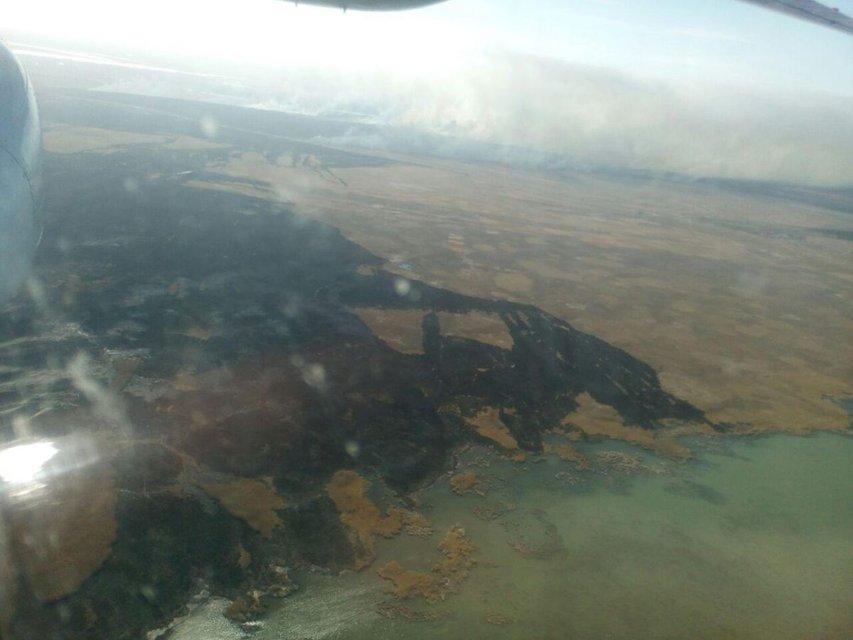 В Одесской области масштабно горят десятки гектаров леса (ФОТО) - фото 176916