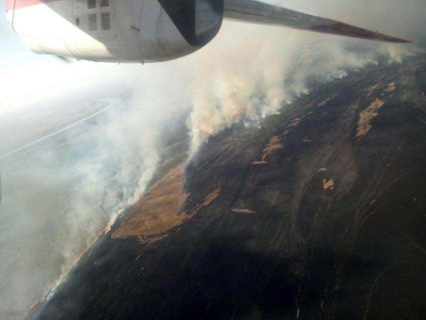 В Одесской области масштабно горят десятки гектаров леса (ФОТО) - фото 176917