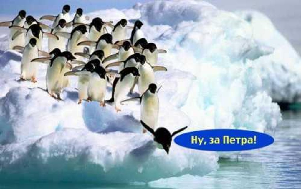 Антарктида не любит Тимошенко – ФОТО - фото 178469