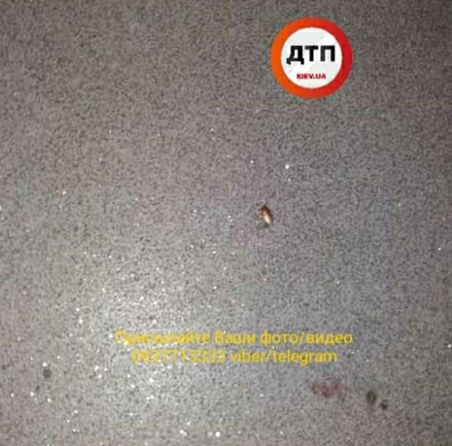'Они везде': в 'Укрзализныци' кишат тараканы – ФОТО - фото 185820