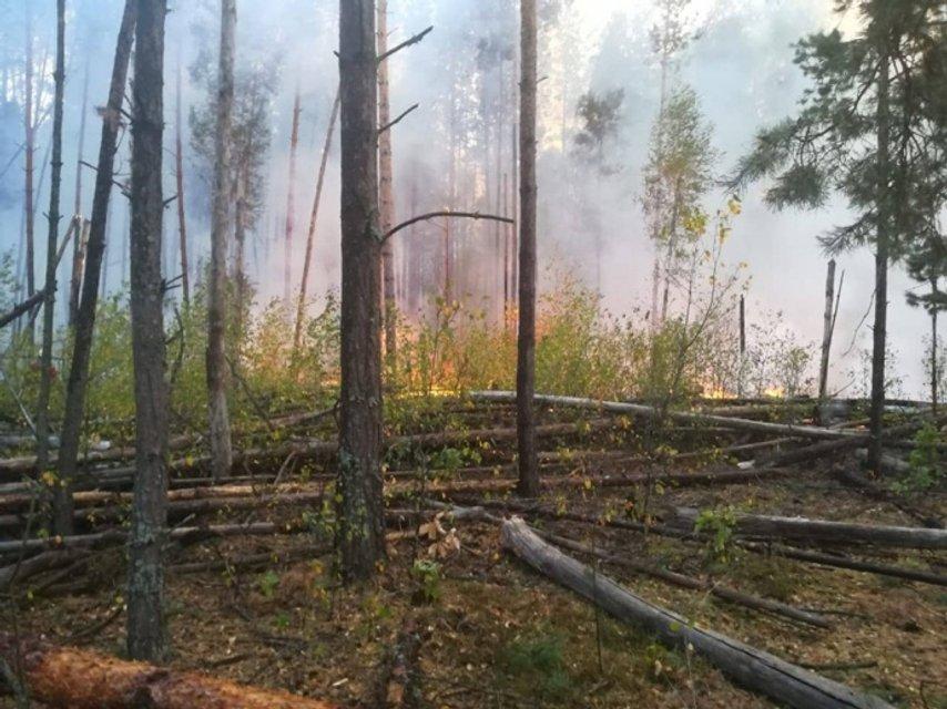 Масштабнейший пожар под Чернобылем: огонь перебрался на Зону отчуждения (ФОТО) - фото 187641