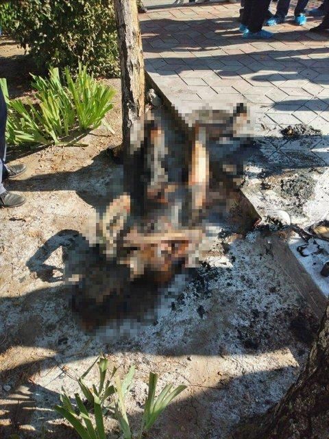 В Запорожье девушка сгорела заживо у церкви - страшные ФОТО - фото 203578