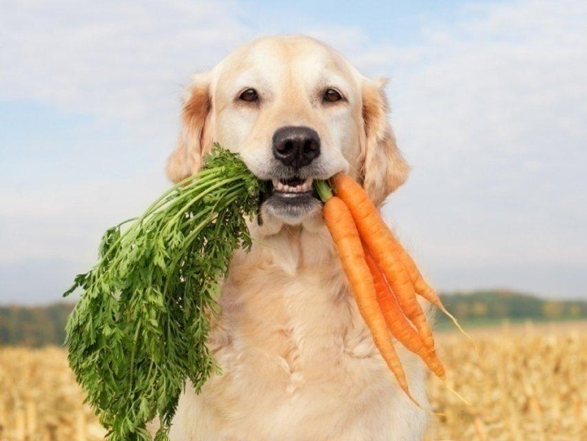 Основная причина лишнего веса у собак – избыточное питание - фото 204170