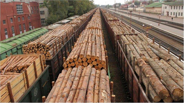 Геннадий Москаль ограничил вывоз лесоматериалов за рубеж - фото 1