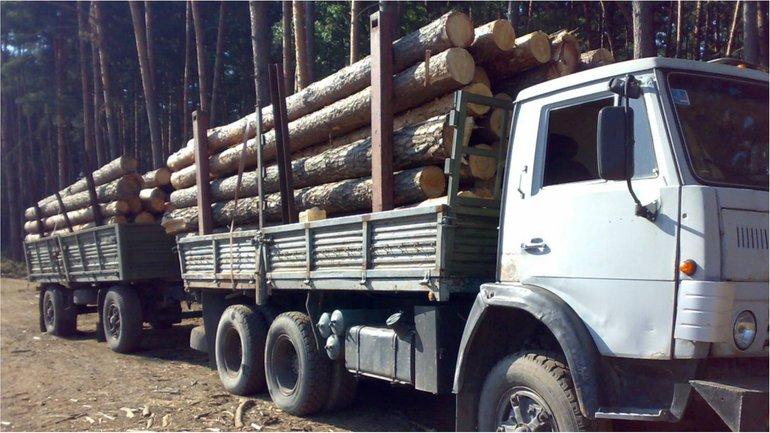 К ответственности привлекают тех, кто под видом дров продает в ЕС украинский лес-кругляк - фото 1