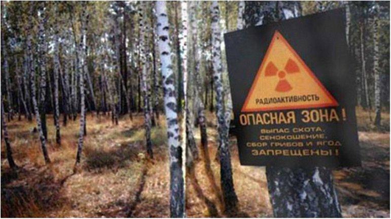 Указ президента о создании заповедника в зоне отчуждения вступил в силу - фото 1