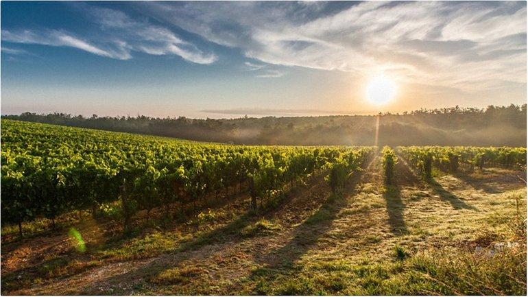 Порошенко одобрил отмену лицензии на оптовую торговлю для виноделов - фото 1