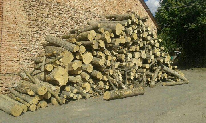 Обнаружено 400 кубометров нелегально вырубленного леса  - фото 1