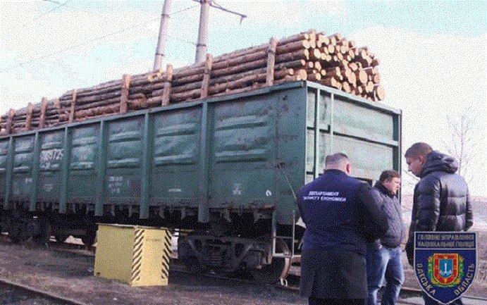 Во время обыска было изъято 1330 кубических метров дерева - фото 1