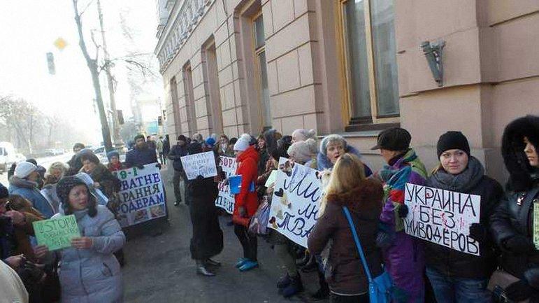 Активисты требуют принятия закона, ужесточающего наказание за живодерство - фото 1