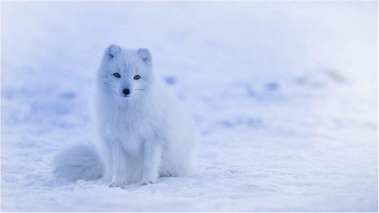 Снег да снег кругом - фото 1