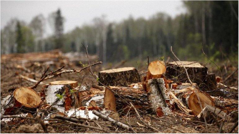 Задержанные занимались незаконной вырубкой леса - фото 1