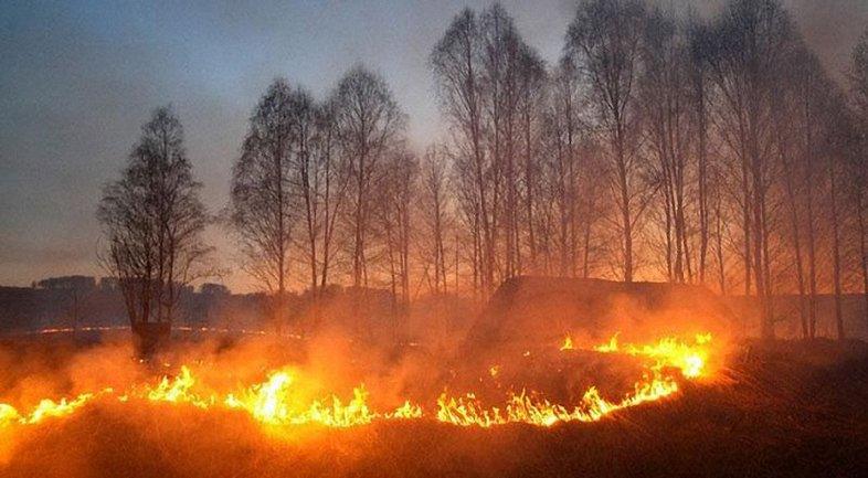 Спасатели успели вывезти с пожара все население деревни - фото 1