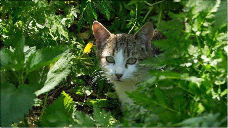 Коты переезжают - фото 1