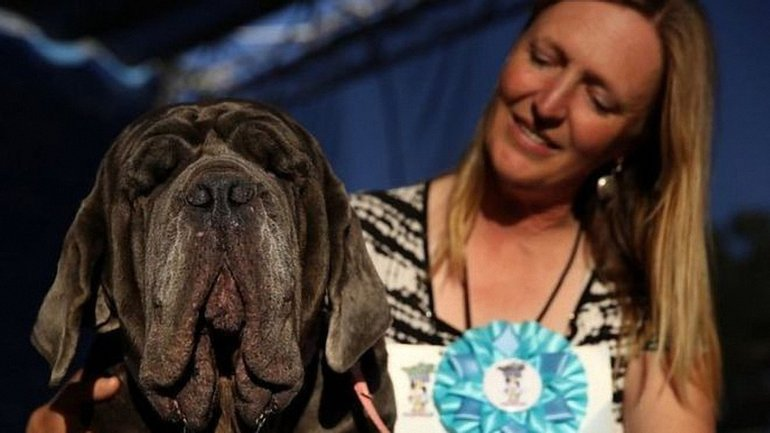 """В США титул """"самой некрасивой собаки"""" считается почетным - фото 1"""
