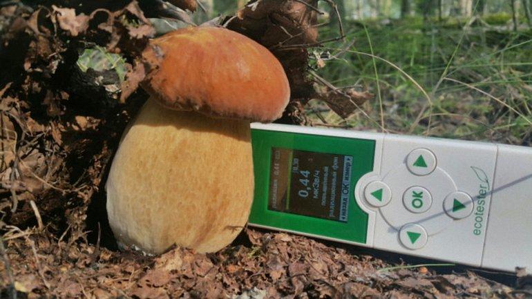 Россия импортировала во Францию зараженные грибы - фото 1