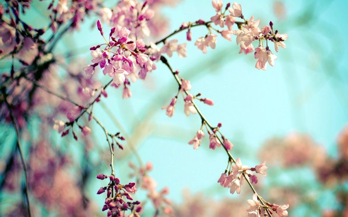 Настоящая весна: погода на 21 апреля - фото 1