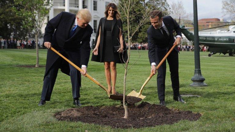 С лужайки Белого дома исчез дуб, который садили Трамп и Макрон - фото 1