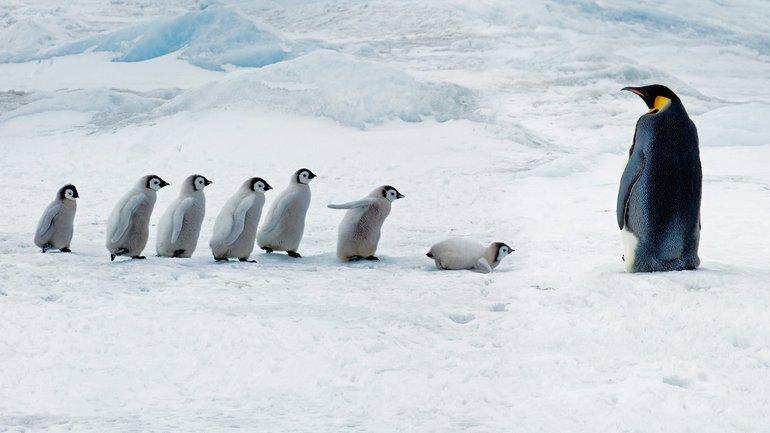 На Антарктическом полуострове выпало много снега - фото 1