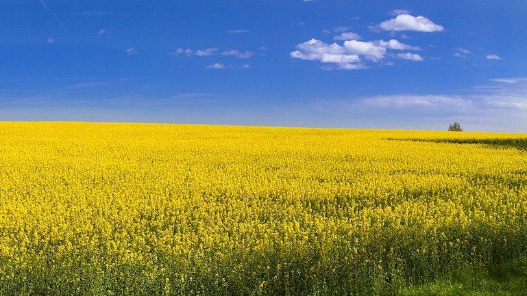 ЕСПЧ занялся украинским мораторием на продажу сельхозземель - фото 1
