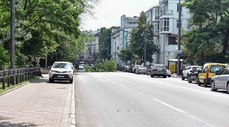 В Киеве на три автомобиля упало дерево - фото 1