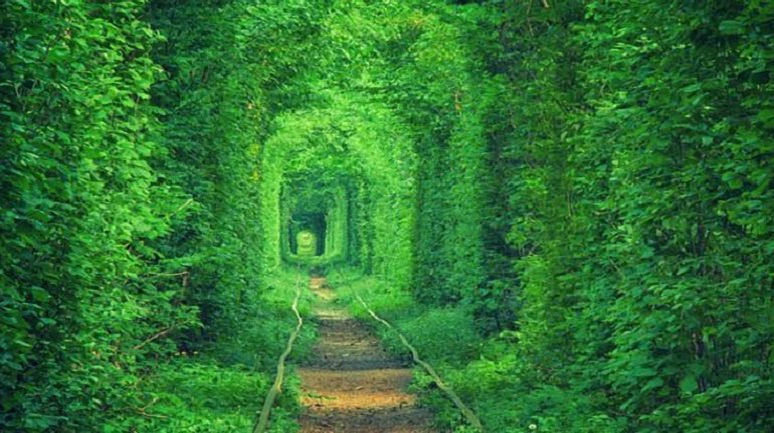 """Въезд в """"Тоннель любви"""" будет платным с июля - фото 1"""