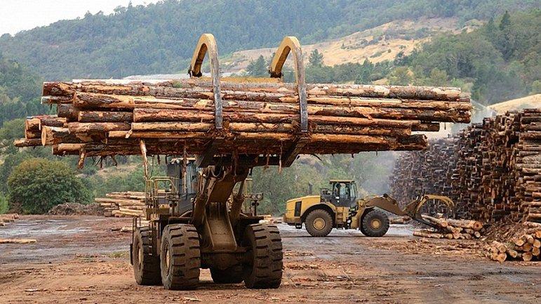 Какие компании в ЕС заказывает незаконную древесину из Украину - фото 1