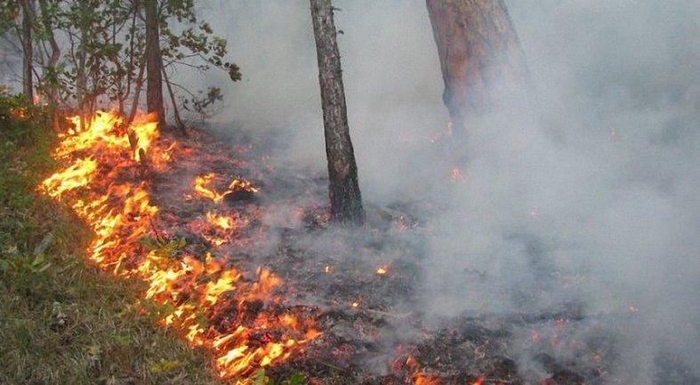 В Луганской области потушили масштабный пожар - фото 1