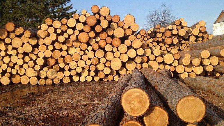 Наказание за вывоз леса-кругляка ужесточили - фото 1
