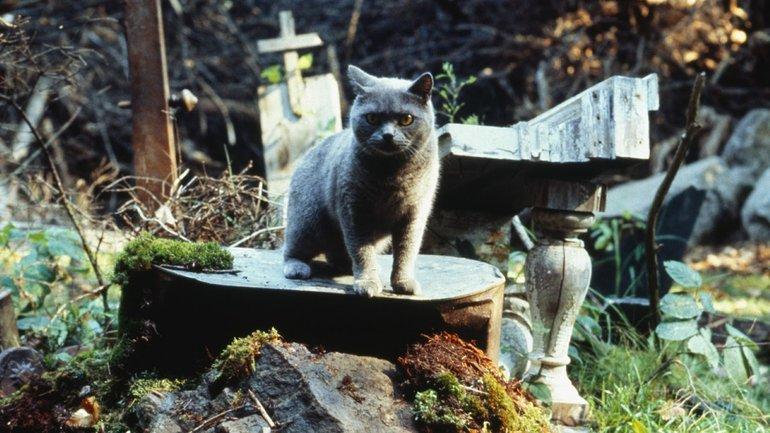 """В сети появился трейлер фильма """"Кладбище домашних животных"""" - фото 1"""