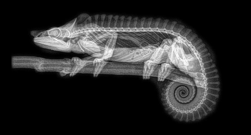 Зоопарк в Орегоне показал рентгеновские снимки живтоных - фото 1