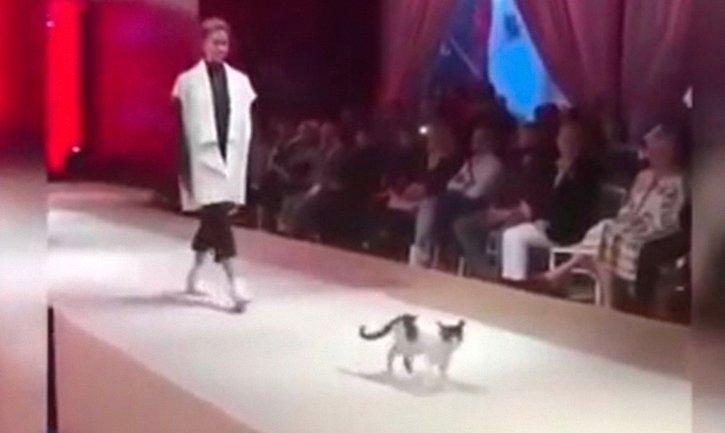 В Стамбуле новой моделью показа стала кошка - фото 1