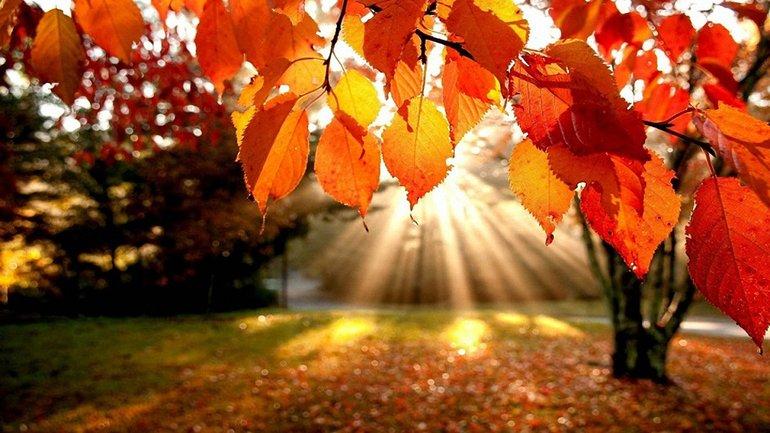 Список праздников 8 ноября - фото 1