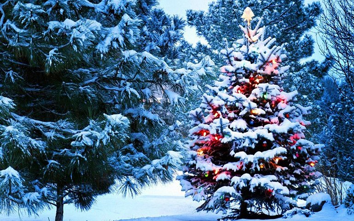 Новый год 2019 - когда в Киеве устанавливают главную елку ...