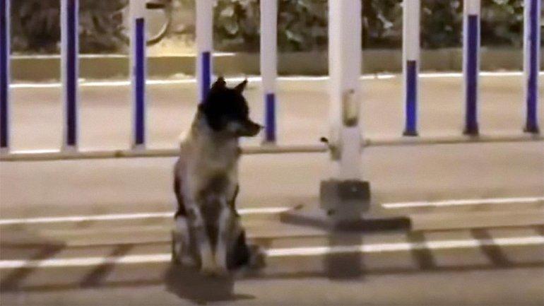 В Китае собака более 80 дней ждет на дороге свою хозяйку, которая погибла на этом месте - фото 1