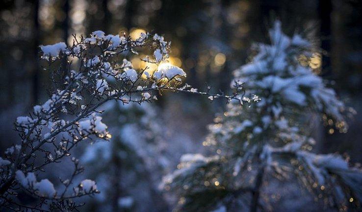 Синоптики предупреждают о снегопадах и штормовом ветре - фото 1
