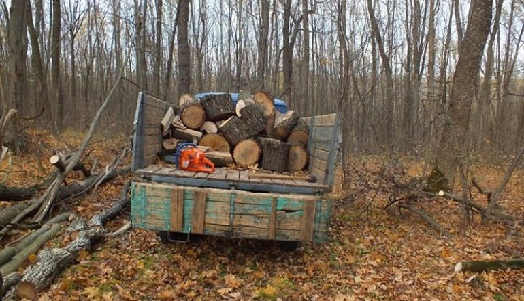 Лесорубы-недруги: на Львовщине дерево убило парня - фото 1