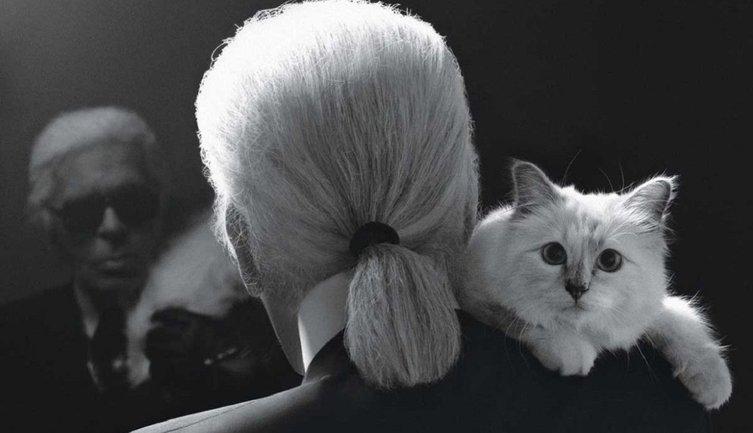 После смерти кошки Шупетт ее прах смешают с прахом хозяина - фото 1