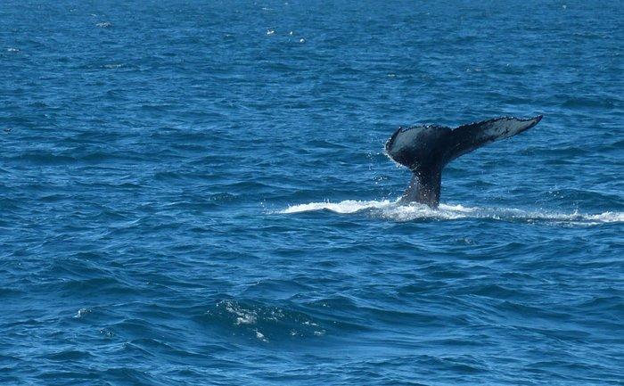В Японском море паром столкнулся с китом: пострадали люди - фото 1
