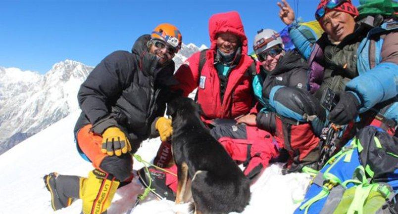 Бродячий пес привязался к альпинистам и покорил с ними вершину в 7 тысяч метров - фото 1