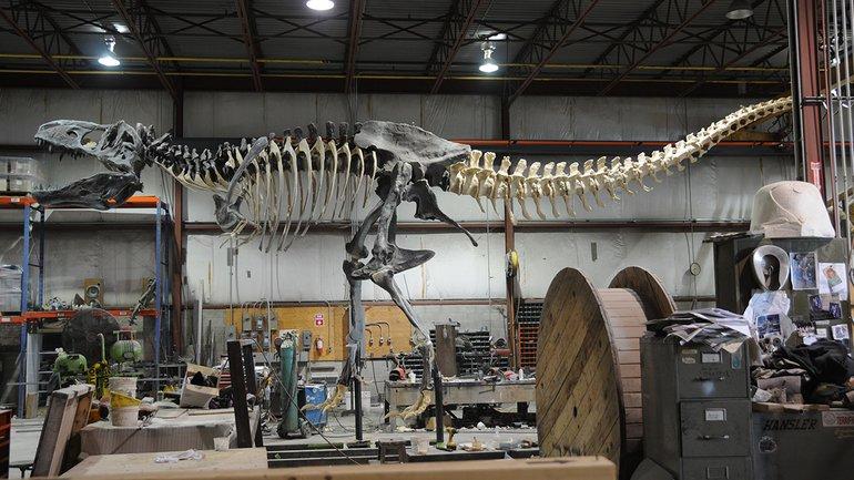 В Канаде определили останки самого большого тираннозавра - фото 1
