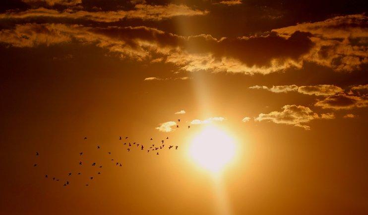 Активность солнца в июле достигнет своего пика - фото 1